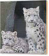 Snow Leopard Cubs Wood Print