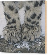 Snow Leopard Feet Wood Print