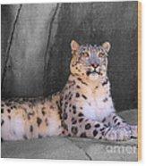 Snow Leopard II Wood Print