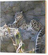 Snow Leopard    No.2 Wood Print