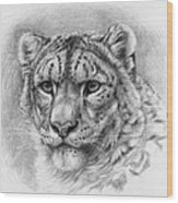 Snow Leopard - Panthera Uncia Wood Print