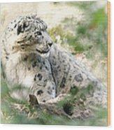 Snow Leopard Pose Wood Print