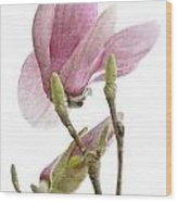 Snow Magnolia Painterly 1 Wood Print