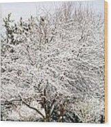 Snow Maple Wood Print