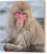 Snow Monkey In The Onsen Wood Print