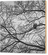 Snow On Bare Branches Wood Print