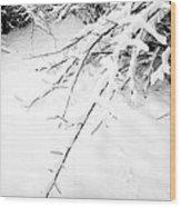 Snow On Branch Wood Print