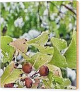Snow On Green Leaves With Red Berries Wood Print