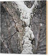 Snow On The Birch Wood Print