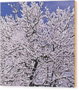 Snow On Tree Wood Print