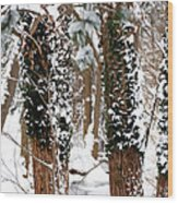 Snow On Tress 2 Wood Print