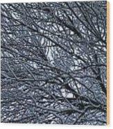 Snow On Twigs Wood Print
