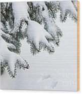 Snow On Winter Branches Wood Print by Elena Elisseeva