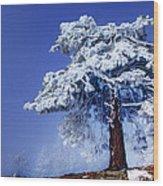 Snow Pine Wood Print