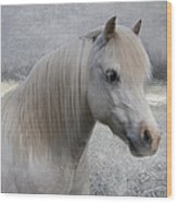 Snow Pony Wood Print