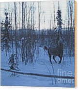 Snow Prancer Wood Print by Elizabeth Stedman