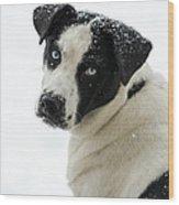 Snow Puppy Wood Print