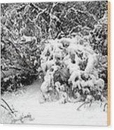 Snow Scene 1 Wood Print by Patrick J Murphy