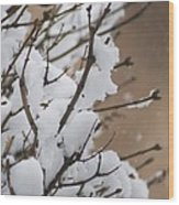 Snow Shower Wood Print