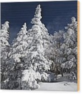 Snow Spruce Sunshine Wood Print