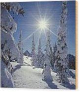 1m4882-snow Laden Tree Sunburst Wood Print
