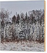 Snow Tree Line Wood Print by Gary Gish