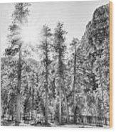Snow Trees Wood Print