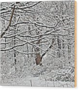 Snow White Forest Wood Print