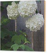 Snowball Flowers Wood Print