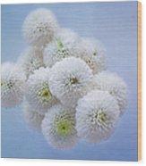 Snowballs-pom Mum Wood Print