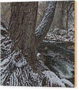Snowbark Wood Print