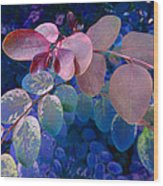 Snowbush Blue Wood Print