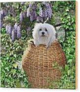 Snowdrop In A Basket Wood Print
