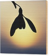 Snowdrop Silhouette Wood Print by Tim Gainey