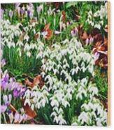 Snowdrops And Crocuses Wood Print
