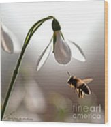 Snowdrops And The Bee Wood Print