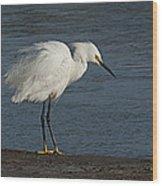 snowey Egret by Water's Edge Wood Print