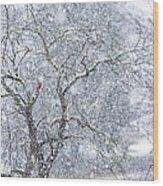 Snowfall And Apple Tree Wood Print