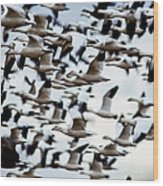 Snows Ross And Aleutians Wood Print
