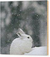 Snowshoe Hare In Snowfall Yellowstone Wood Print