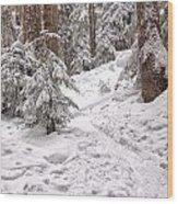 Snowshoe Trail Wood Print