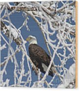 Snowy Bald Eagle Wood Print