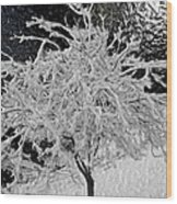 Snowy Branches In Darkness Wood Print