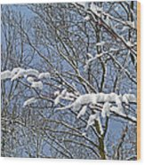 Snowy Branches With Blue Sky Wood Print