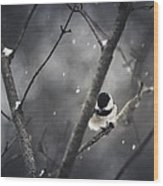 Snowy Chickadee Wood Print by Shane Holsclaw