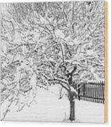 Snowy Crab Apple Wood Print