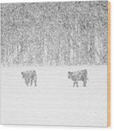 Snowy Day Highland Cattle Wood Print