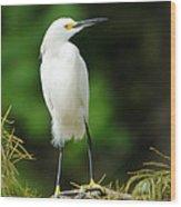 Snowy Egret 1 Wood Print