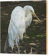 Snowy Egret 2 Wood Print