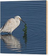 Snowy Egret Catches Sushi And Seaweed Wood Print